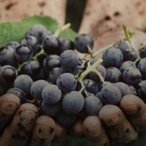 Eventi in agenda, non solo Cantine Aperte: in tutta Italia il vino celebra l'arrivo dell'estate