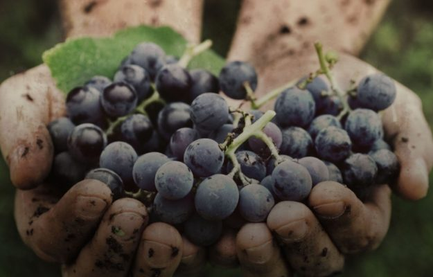 LUIGI MOIO, NATURAL WINE, OIV, VITICULTURE, News
