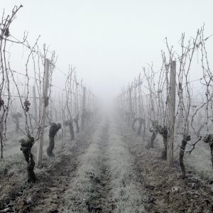 Climate change: the alarm also rings in the vineyard, between solutions and future scenarios