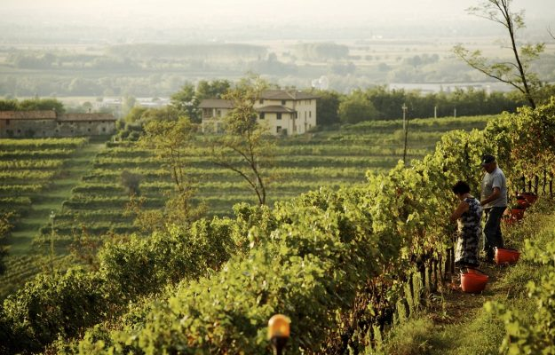 FONDI UE, OCM, WINE, News