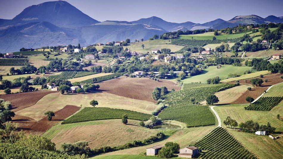 ITALIA BIANCHISTA, TRAGUARDI, VERDICCHIO, Su i Quaderni di WineNews