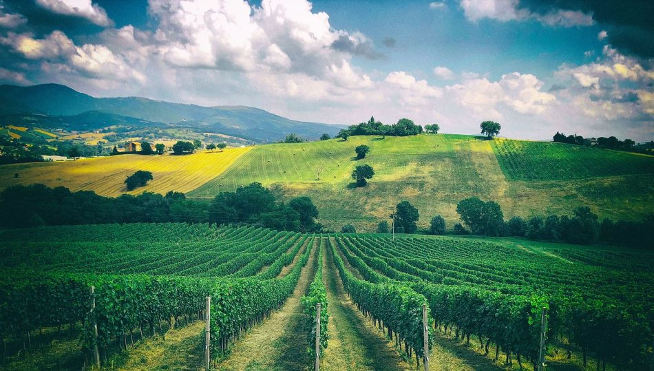 INVECCHIAMENTO BIANCHI, MARCHE, VERDICCHIO, Su i Quaderni di WineNews