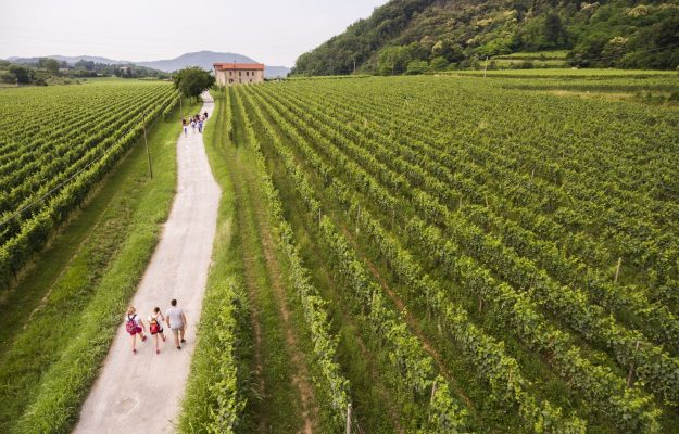 ENIT, STRADE DEL VINO, WINE, WINE AND FOOD TOURISM, News