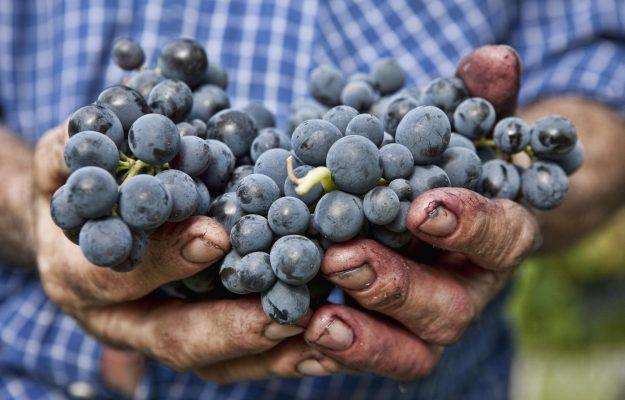 #ILVINONONSIFERMA, ITALIAN WINE, WINE PRODUCER, wine supply chain, News