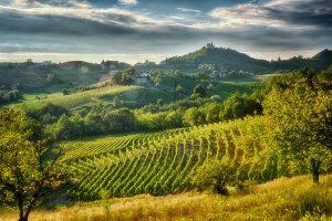 Gavi, il territorio del bianco del Piemonte che bacia la Liguria, tra qualità del vino ed enoturismo