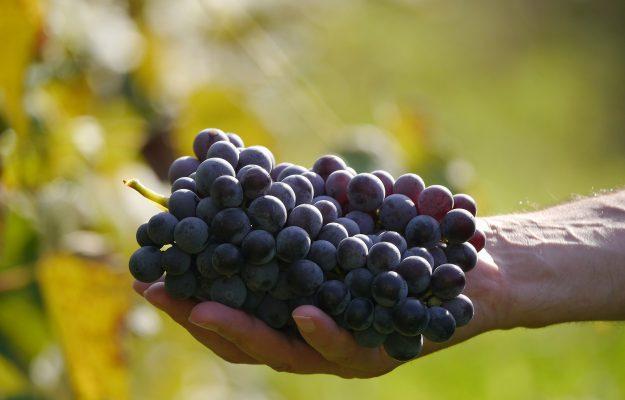 CIBO, ECONOMIA, FOOD INDUSTRY MONITOR, UNIVERSITÀ DI POLLENZO, vino, Italia