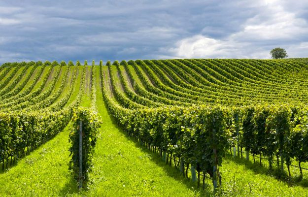 DAVIDE GAETA, HECTARES, VINEYARDS, WINE, yields, News