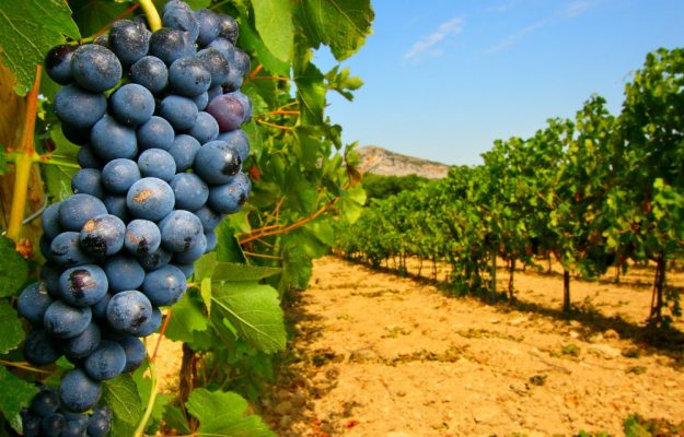 AGRICOLTURA ITALIANA, ASSOBIO, BIOLOGICO, SANA, VITICOLTURA, Non Solo Vino