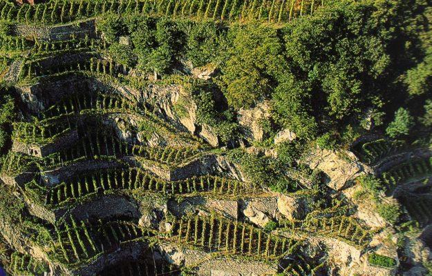CAMERA, Commissione Agricoltura, GALLINELLA, VIGNETI EROICI, Italia