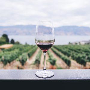 Ad agosto il vino non va in vacanza: a Ferragosto sul Vesuvio col calice in mano da Casa Setaro
