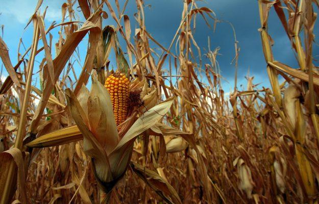 Coldiretti, OGM, Non Solo Vino