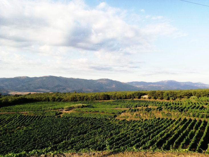 CAMBIAMENTO CLIMATICO, NUOVA CONCEZIONE VITIVINICOLA, SICILIA, Su i Quaderni di WineNews