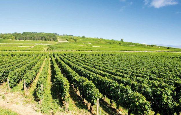 CLIMA, Provenza, ROUGE PROVENCE, vino, Mondo