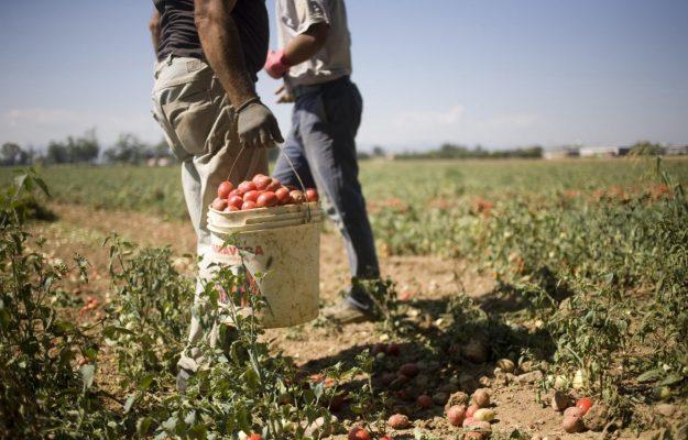 AGRICOLTURA, Confagricoltura, ESTERNALIZZAZIONI, LAVORO, Non Solo Vino