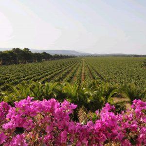 Sella&Mosca, 120 anni di vino italiano, e di spirito pionieristico dedicato alla Sardegna