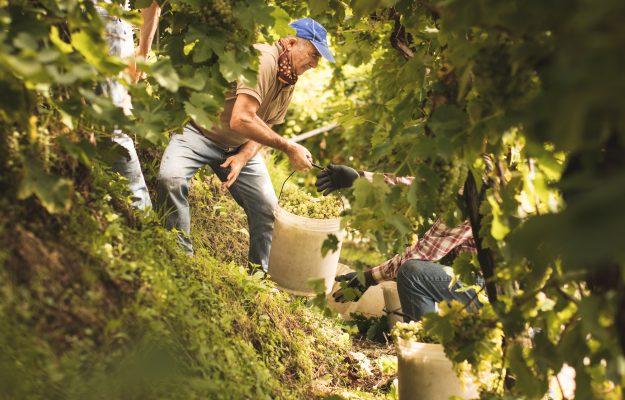 Heroic vineyards, prosecco hills, UNESCO, WINE, News