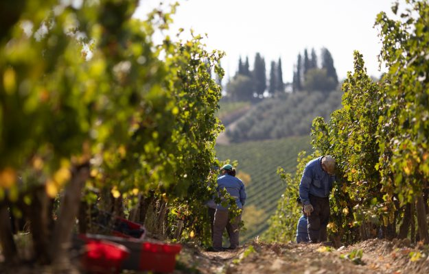 FRANCIA, ITALIA, MOSTI, PRODUZIONE, SPAGNA, UE, VENDEMMIA, vino, Mondo