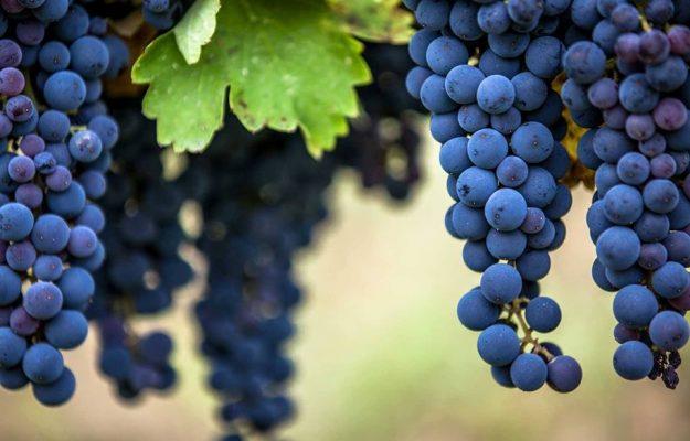 ASSOENOLOGI, BASILICATA, ENOTECA LUCANA, MATERA, PAOLO MONTRONE, vino, VULTURE, Italia