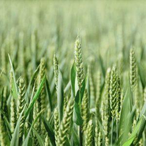 """Agricoltura e finanza: ecco """"Finance for Food One"""", fondo che punta a 200 milioni di euro"""