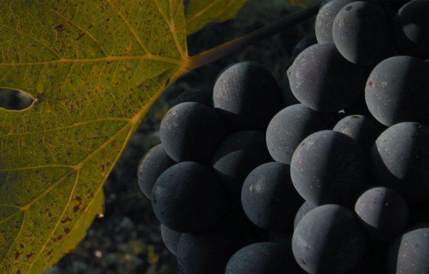 BANFI, SANGIOVESE, SANGUIS JOVIS, WINE, News