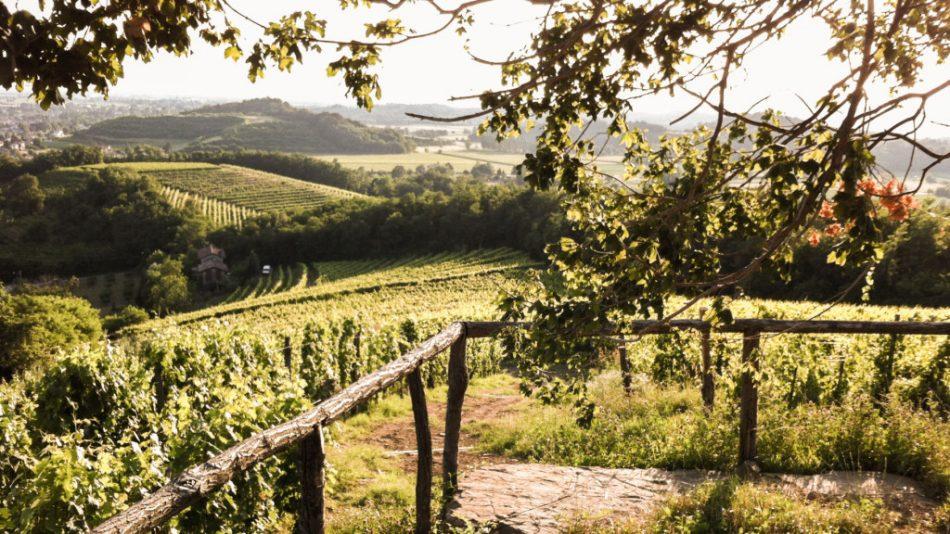 DISPUTE SENZA RAGIONE, FRIULANO, TOCAI, Su i Quaderni di WineNews