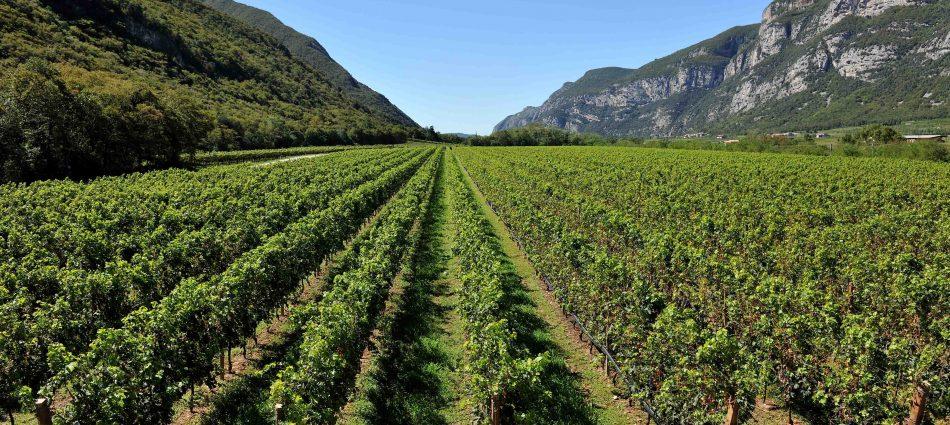 Crescita della qualità e definizione di uno stile: i primi traguardi del Pinot Grigio delle Venezie