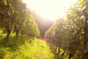 Dazi Usa: il vino italiano, per ora, è salvo. Ma gli States, fondamentali, preoccupano la filiera
