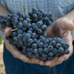I vini biologici e biodinamici raccolgono punteggi superiori alle produzioni tradizionali