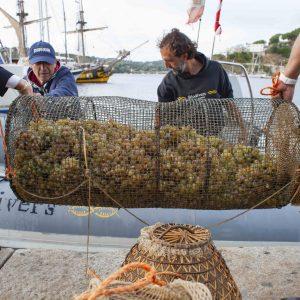 Alle origini dell'enologia, Nesos, il vino marino ottenuto da Ansonica vinificata come 2.500 anni fa