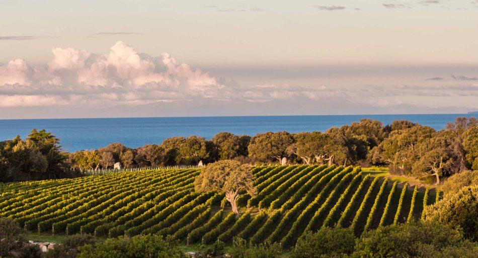 BOLGHERI, Su i Quaderni di WineNews