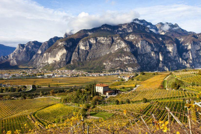 BOLLICINE DI MONTAGNA, TRENTINO, Su i Quaderni di WineNews