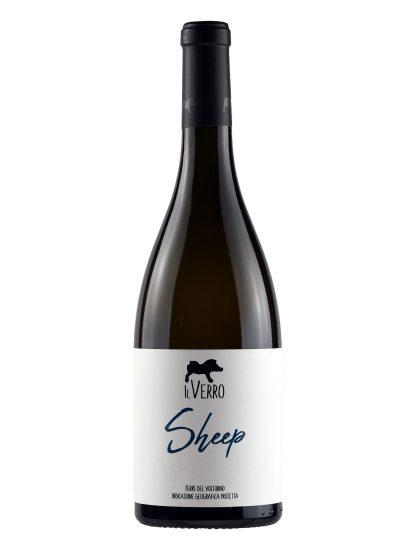 CODA DI PECORA, IL VERRO, VOLTURNO, Su i Vini di WineNews