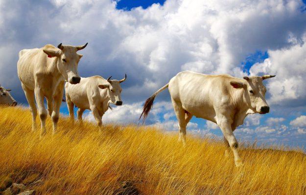 ANIMALI, Coldiretti, SANT'ANTONIO ABATE, Non Solo Vino