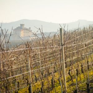 Nebbiolo Prima and Grandi Langhe 2020: Barolo, Barbaresco and Roero facing climate