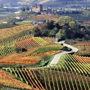"""I grandi vini, il tartufo e non solo: il Piemonte tra le """"7 best wine travel experiences 2020"""""""
