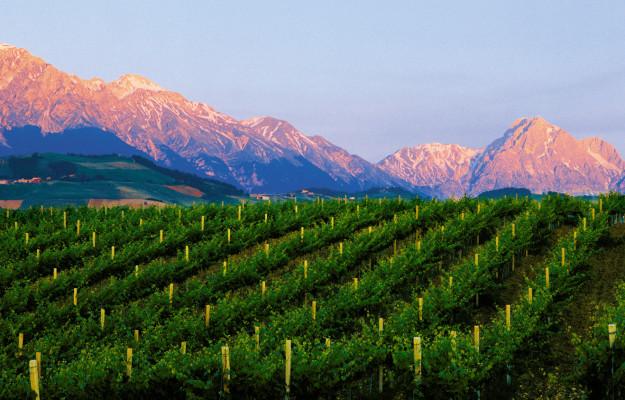ABRUZZO, CONSORZIO VINI D'ABRUZZO, WORDS OF WINE, Italia