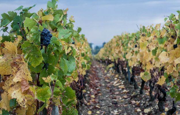 Bordeaux, BORGOGNA, CHAMPAGNE, ETTARO VITATO, LOIRA, QUOTAZIONI, RODANO, SAFER, VIGNETO, Mondo