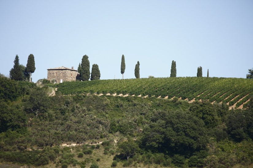 I 2.100 ettari di vigneti a Brunello di Montalcino hanno un valore stimato di oltre 2 miliardi di euro