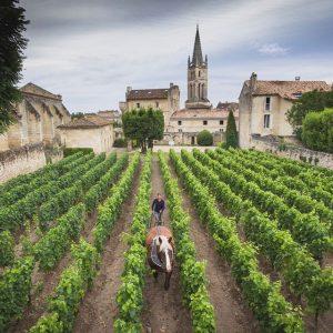 Bordeaux, una vendemmia 2019 di altissima qualità, e prezzi previsti in ribasso