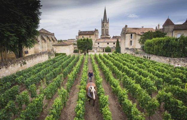 2020, Bordeaux, En Primeur, UNION DES GRANDS CRUS, Mondo