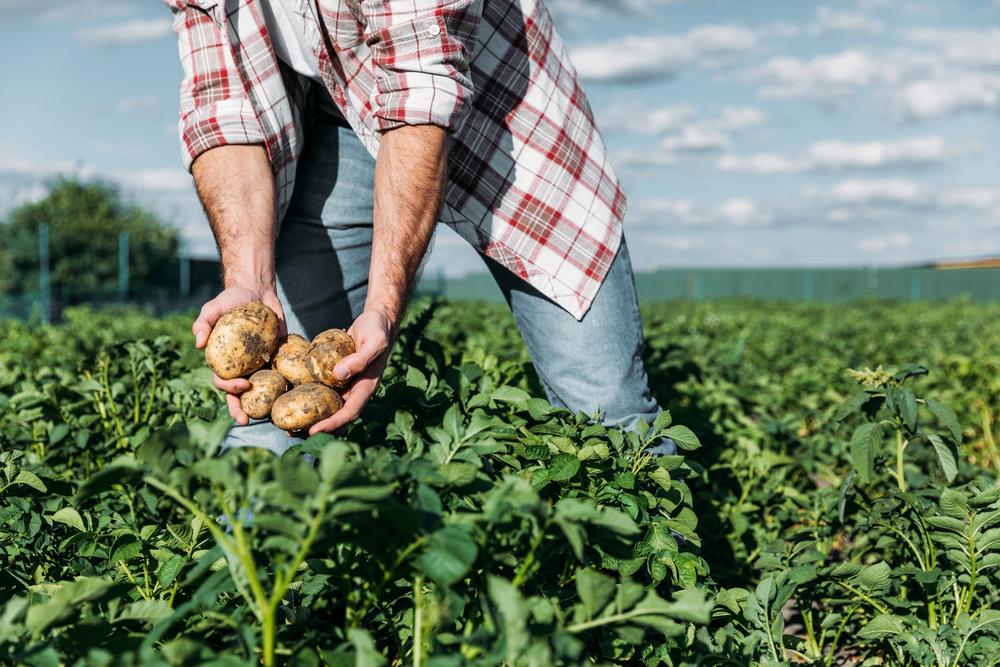Cercasi manodopera, a rischio frutta e verdura nei supermercati ...