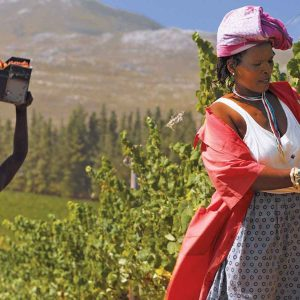 Sudafrica, nel bel mezzo delle vendemmia il Governo ferma il mondo del vino