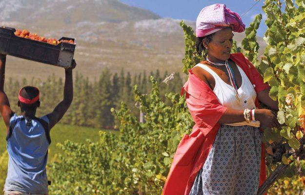 CANTINA, COVID-19, LAVORO, STOP, SUDAFRICA, VENDEMMIA, vino, Mondo