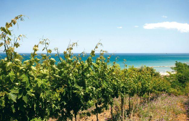 BERLINER WEIN TROPHY, ITALIA, vino, Mondo