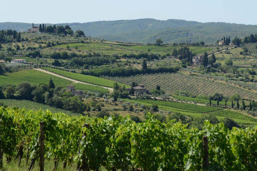CHIANTI CLASSICO, DENOMINAZIONE, IN CIFRE, Su i Quaderni di WineNews