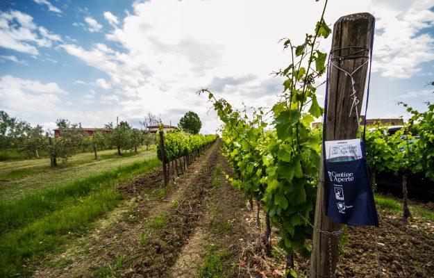 CANTINE APERTE, MOVIMENTO TURISMO DEL VINO, VIGNETI APERTI, vino, Italia
