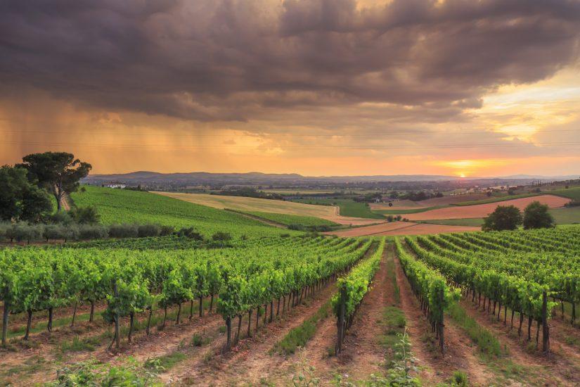 IDENTITÀ E DIFFERENZE, IMBOTTIGLIAMENTO, MONTEPULCIANO, VIGNA, Su i Quaderni di WineNews