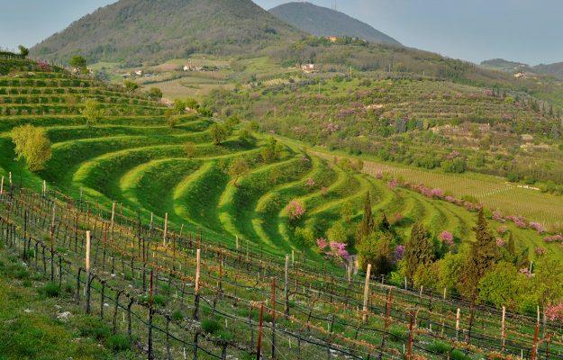 COLLI EUGANEI, COVID, vino, VO, Italia