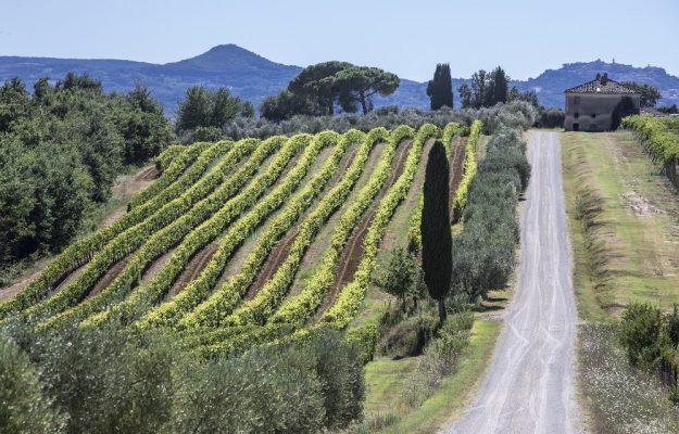 EQUALITAS, LAVORO, vino, Italia