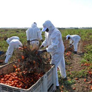 La riapertura dei confini dà ossigeno alle campagne: a Pescara atterranno 124 lavoratori dal Marocco